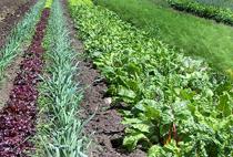 rang de légumes